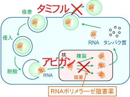 virus-a1